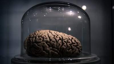 Kiszárított emberi agy a trentói Tudományos Múzeumban. Forrás: Flickr/Riccardo Meneghini