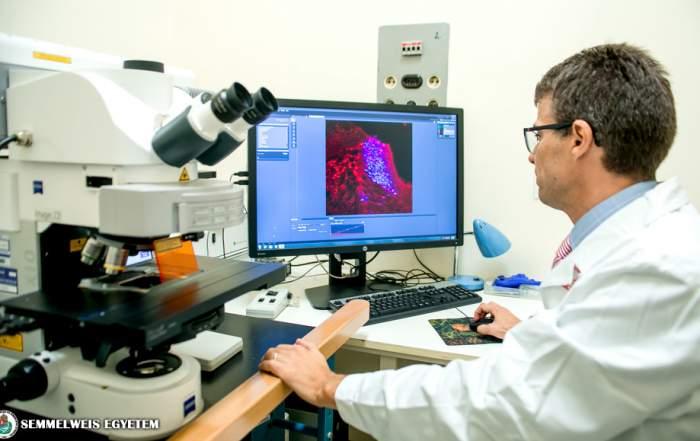 Alpár Alán, Semmelweis Egyetem Kísérletes Neuroanatómiai és Fejlődésbiológiai Csoport