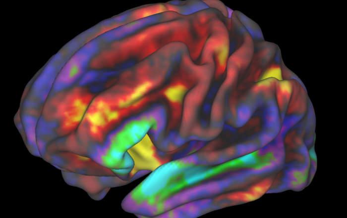 Gyerekagy fMRI, forrás: NIH Image Gallery/Richard Watts, PhD, University of Vermont and Fair Neuroimaging Lab, Oregon Health and Science University