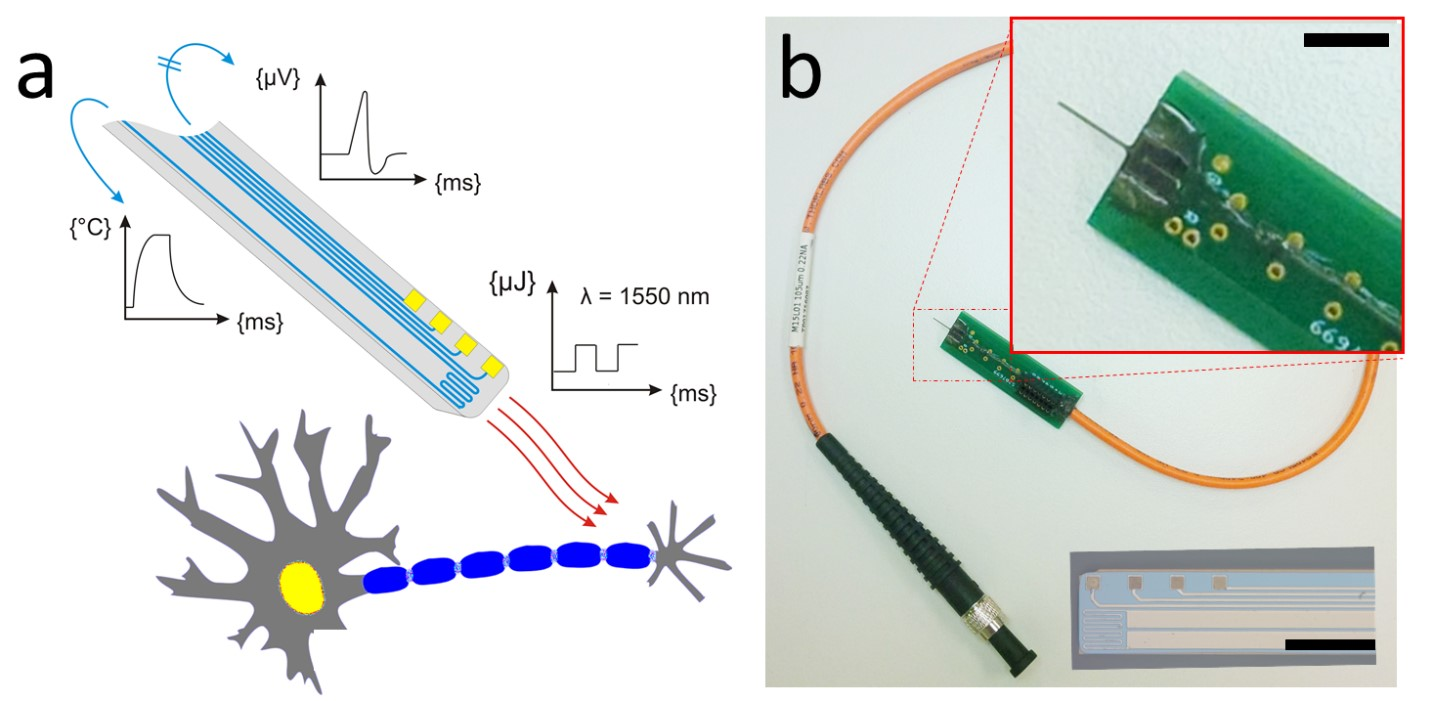 (a) Az integrált, tűalakú mikroeszköz érzékelő (kék) és beavatkozó (piros) funkcióinak szemléltetése, és (b) a felhasználásra kész, külső interfészekkel ellátott eszköz. A bal alsó betétábra a mikrostruktúra mikroszkópos felülnézeti képét mutatja.